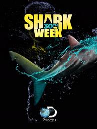 鲨鱼周2018