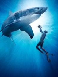 BBC:超越撕咬——鲨鱼是如何拍摄的