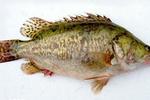 吃鱼好时节 春季食鱼有诀窍