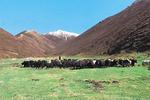来自青海省大通回族土族自治县向化藏族乡上滩村的报告