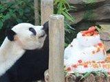马来西亚为中国大熊猫庆祝9岁生日