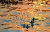 """河湖清澈迎来动植物""""回迁"""""""