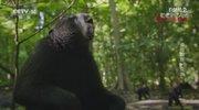 《自然传奇》 20201123 传奇猴族·亚洲