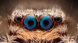 这些眼睛你知道是哪些动物的吗