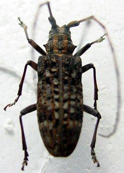 词条标签:昆虫纲生物自然节肢动物门鞘翅目 词条统计 创建者:zhang