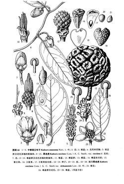 ins植物画