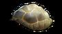 龟壳.png