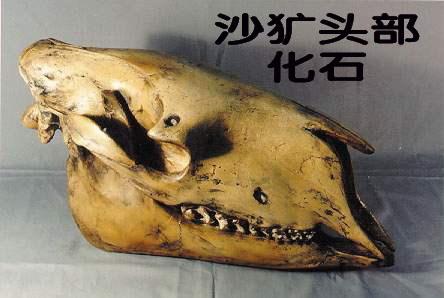 狼牙齿结构