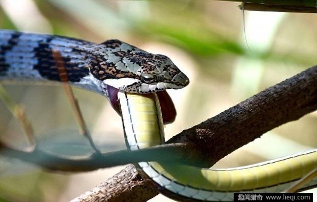 男子山上捕杀到一条巨蛇,剖开蛇肚子瞬间吓呆了