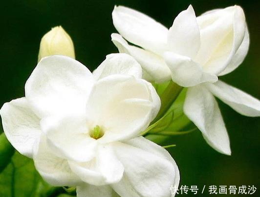 <b>夏天不如养这些花朵,花美色艳,开花不断美翻天,越晒越娇艳</b>