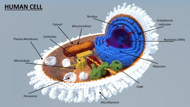 人体细胞结构图(你没看错)