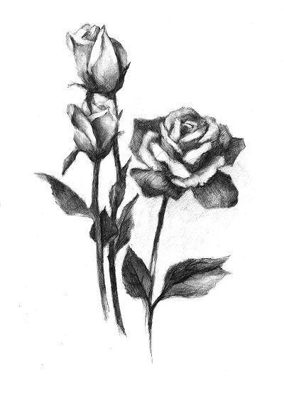 怎样画素描玫瑰花