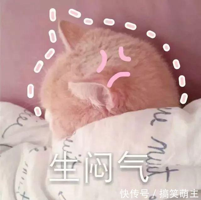 卖萌头像表情:你这个小可爱,电你喔宠萌猫咪表情包图片