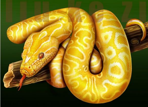 什么动物是金黄色的而且很大