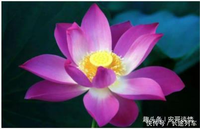 心理学四朵莲花,你最喜欢哪朵测你这辈子最幸运的是什么