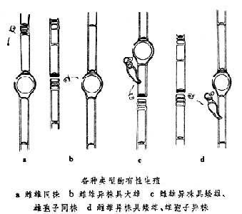 鞘藻目_360百科