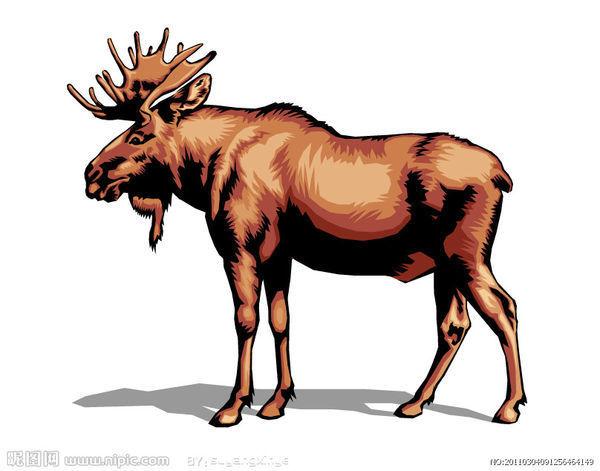 四不像的那个动物叫什么啊?有图片发?