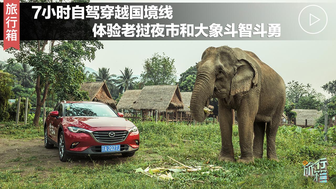 7小时自驾穿越国境线,体验老挝夜市与大象斗智斗勇