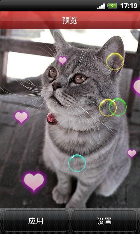可爱小猫咪动态壁纸_360手机助手