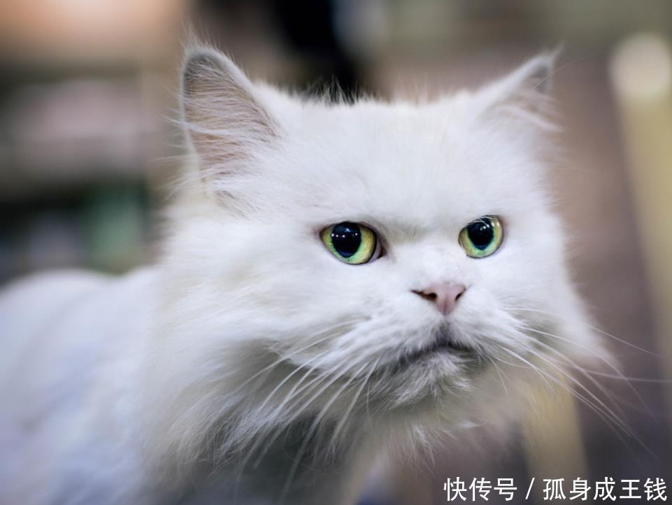 从猫咪的6种行为,可以看出它很想被关爱,你家猫咪也会这样吗