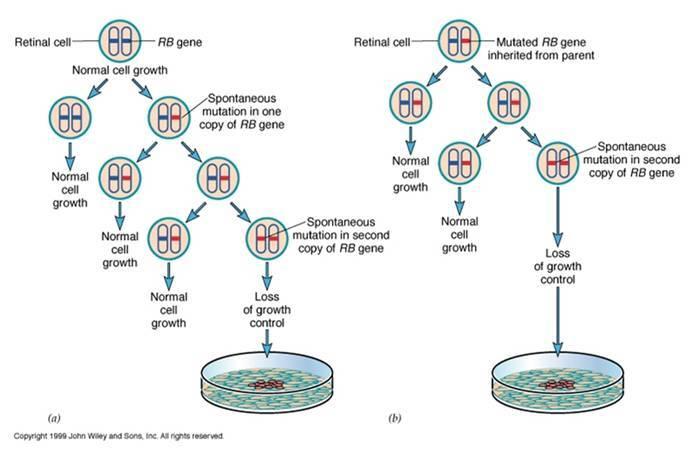 细胞粘附实验步骤