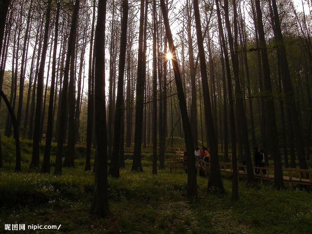 浓密的树林,湿润的空气