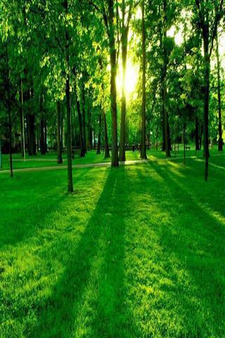 3d绿色森林壁纸
