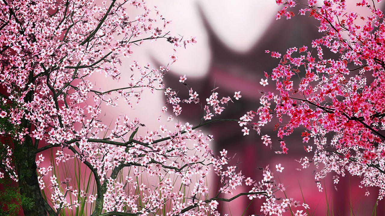 有了这个独特的高清晰度的动态壁纸,您将享受美丽的花卉风景与您的