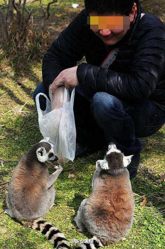 动物园游客无视电网近距离观虎-北京时间