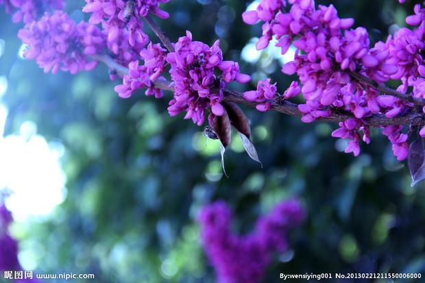 什么树的花是一大串浅紫色的?