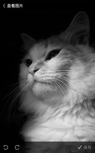 壁纸 动物 猫 猫咪 小猫 桌面 320_512 竖版 竖屏 手机