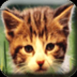 小可爱猫猫壁纸