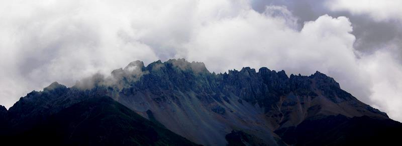 新疆雪山有什么动物