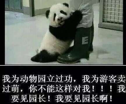 【转】北京时间      这只熊猫火遍全球!57秒抱大腿视频一天破亿 - 妙康居士 - 妙康居士~晴樵雪读的博客