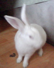 小兔IMG0032A.jpg
