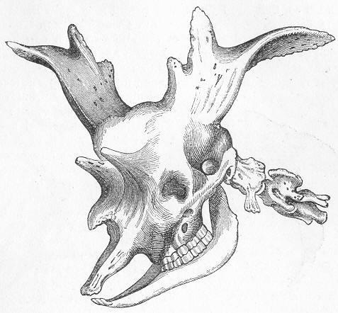 动物骨头素描画