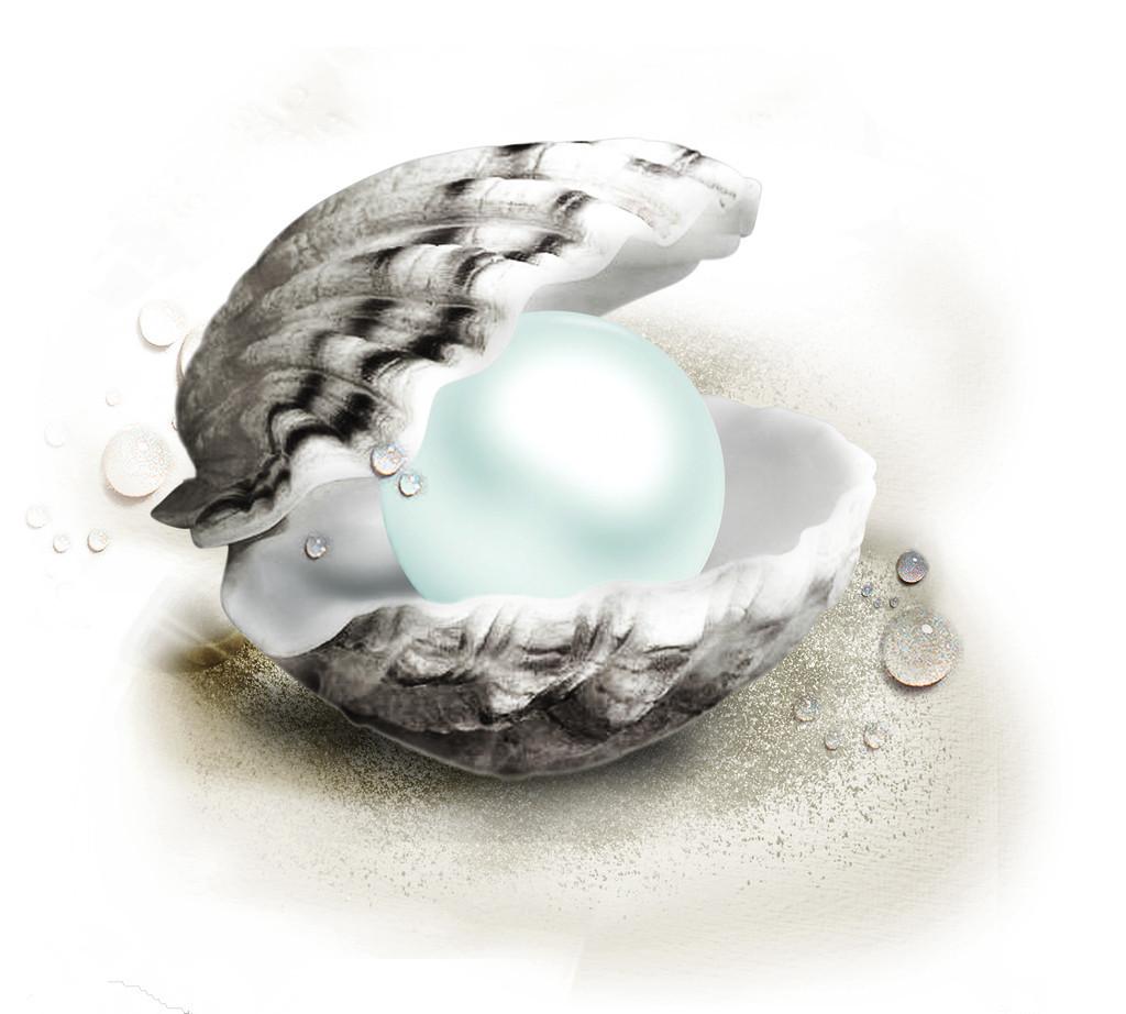 珍珠带壳手绘图