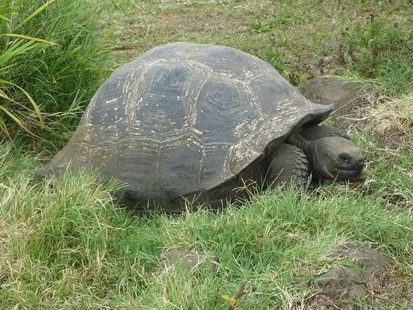 神奇的大自然,世界上最慢、最迟钝的10种动物