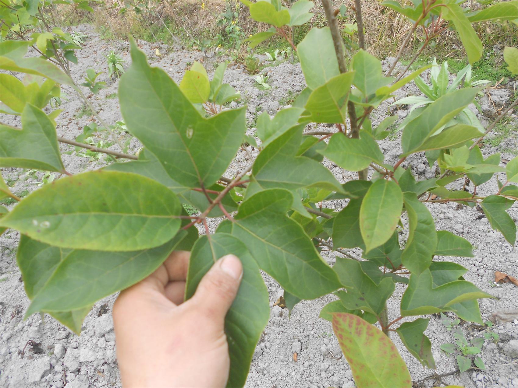 半边植物psd素材