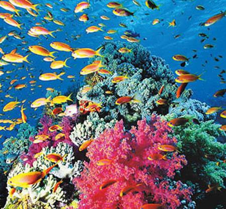 圣诞岛上风光绮丽,四周为珊瑚礁所环绕,岛的外侧暗礁重重,巨浪冲天