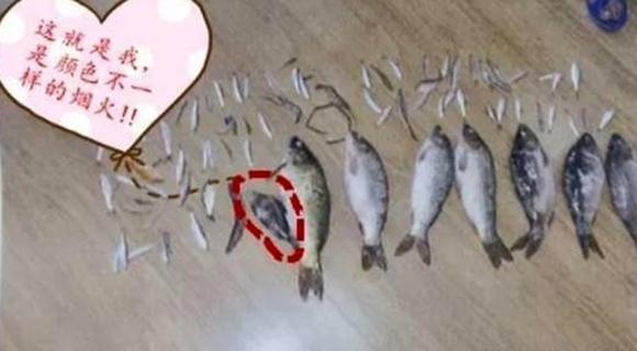 两男子捕到1.1两小鱼致其死亡 被判3年