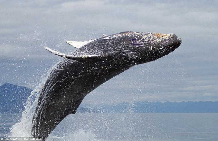 鲸的简笔画图片大全
