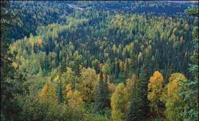 小白龙国家森林公园_360百科