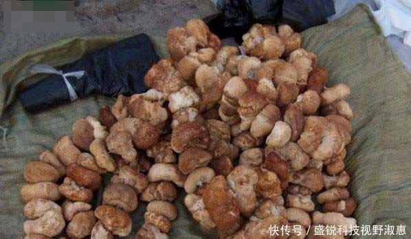 看看朝鲜的农贸市场和中国的农贸市场有啥不同