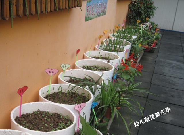 幼儿园创意生态植物角种植区欣赏