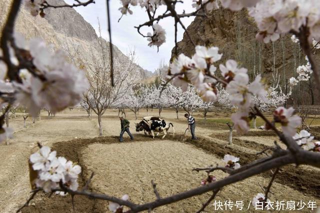 中国颜值最高的民族,美女如云,却非本族人不嫁