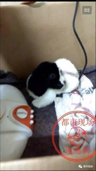 【转】北京时间     羊妈妈被撞死 死亡瞬间生出小羊 - 妙康居士 - 妙康居士~晴樵雪读的博客