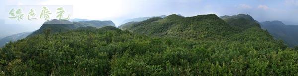 距苍溪县城50公里,海拔1337米,为苍溪县的最高峰,九龙山有森林面积图片