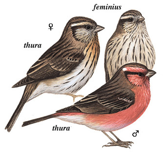 壁纸 动物 鸟 鸟类 雀 340_311