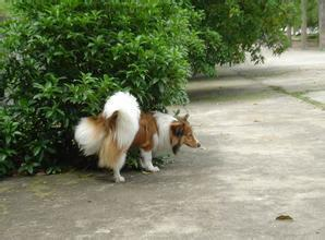 台湾一小区惊人公告惹议-发现狗便溺可自行扑杀